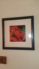 BEAUTIFUL RED ROSE PICTURES in Schaumburg, Illinois