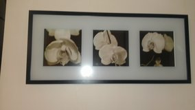 WHITE ORCHID PICTURE in Naperville, Illinois